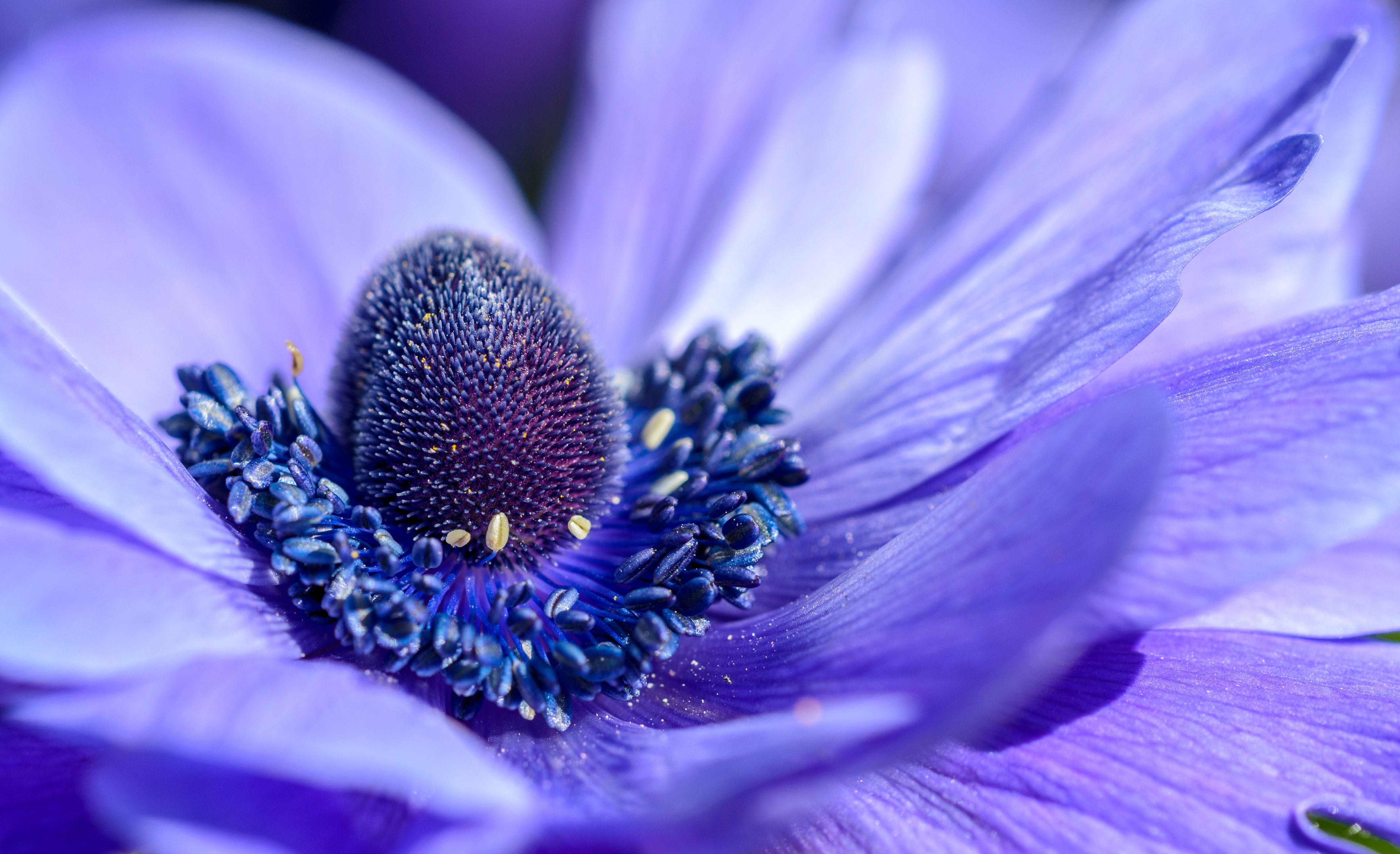 Closeup of a blue flower