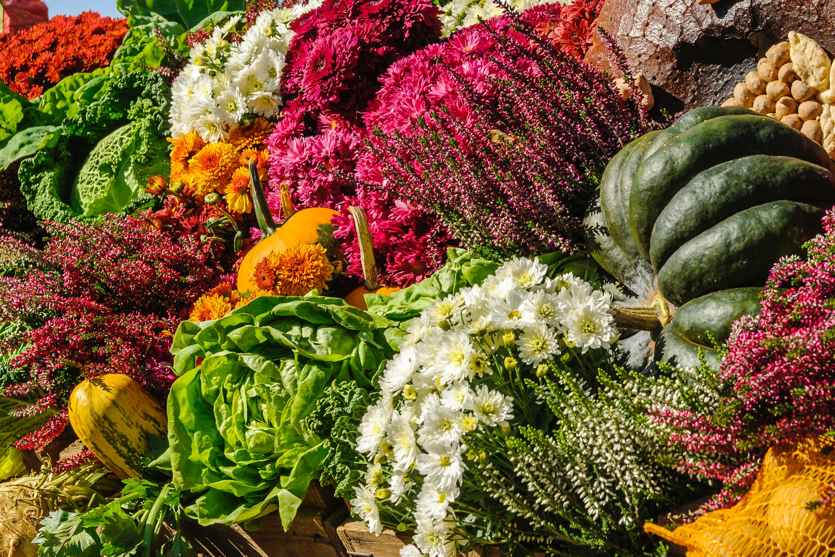 Variety of fall flowers and vegetables