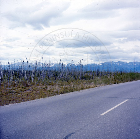 Kenai forest fire burn of 1947, Sterling Highway, Sterling 1966