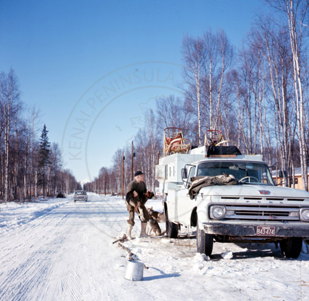 Colonel Norman Vaughan, Alaska State Champion sled dog races, Soldotna 1964