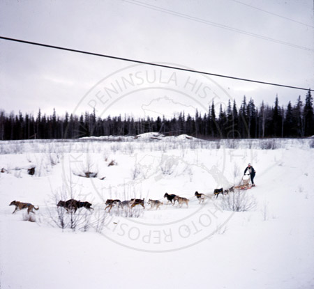 John O'Kane, Alaska State Champion sled dog races of Kenai and Soldotna 1964