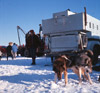 Dr. Roland Lombard's truck and sled dogs, Alaska State Champion sled dog races 1964