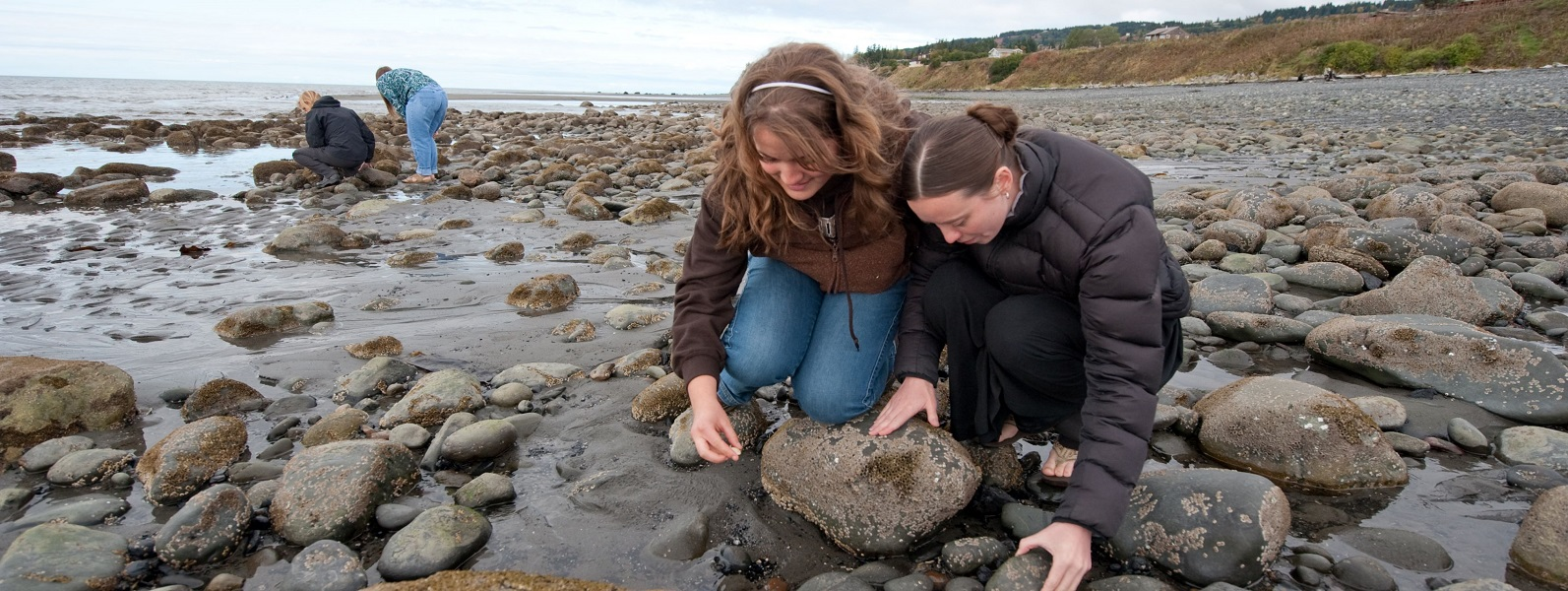 On Bishops Beach in Homer, two female KBC students are examining a rock in the tidal zone with two other students in the distance.